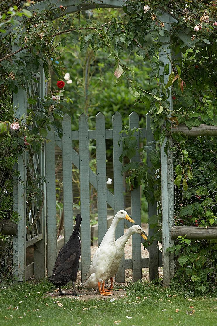 village-garden-gate